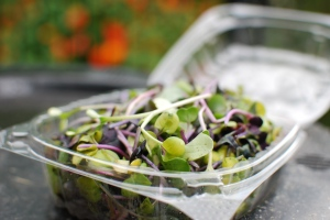 This week, microgreens sadly fed the compost, not me.