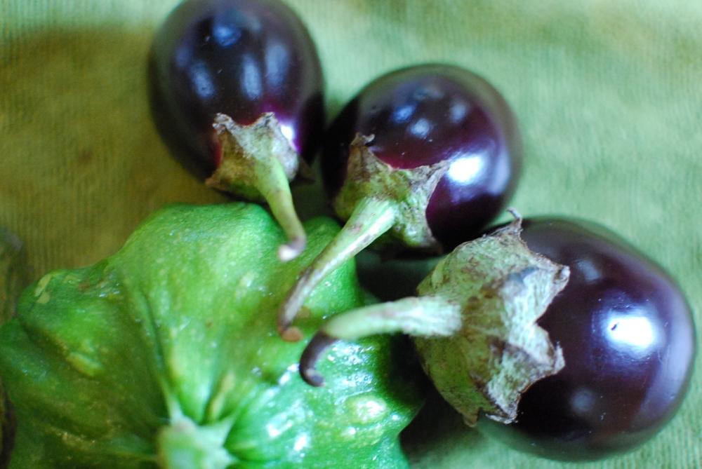 Eggplants and patty-pan