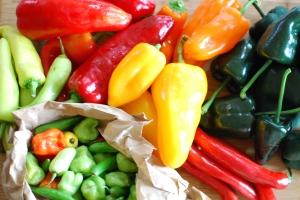 Poblanos, serranos, jalapeños, Cubanelles, bananas, sweet habañeros, bells, and a few mystery peppers.