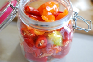 I cut red and orange peppers into largish chunks, then smooshed them into a clean glass jar and topped it all off with brine. Same treatment for a green+yellow jar.