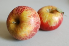 These beautifully russeted Melrose apples are my favorites for out-of-hand eating.